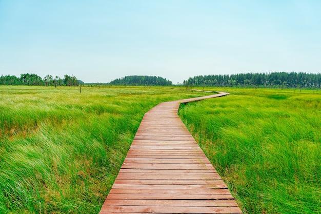 Живописная деревянная прогулочная дорожка через болото с высокой травой летом тихая природная тропа
