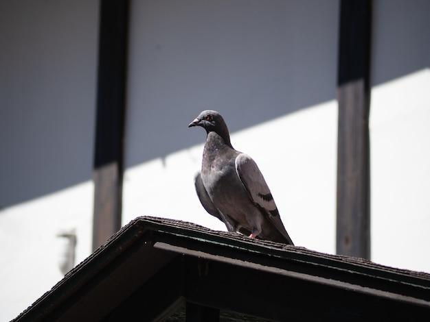 Голубь отдыхает на крышах с голубым небом