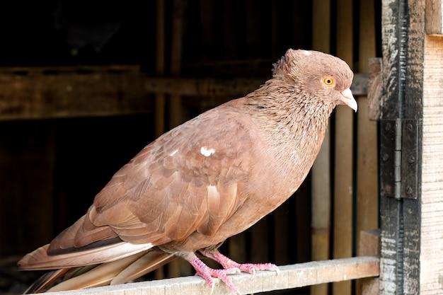 ロフトのドアに立っている鳩がクローズアップ