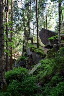 Куча каскадных валунов, покрытых зеленым мхом и ветвями в густом горном лесу