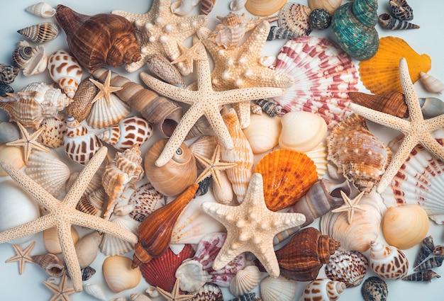 Куча различных раковин и морских звезд, смешанных на светлом фоне