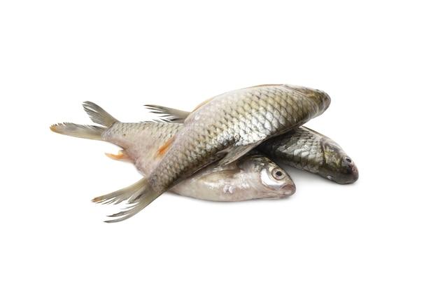 격리된 흰색 배경에 신선한 은빛 미늘 물고기 더미