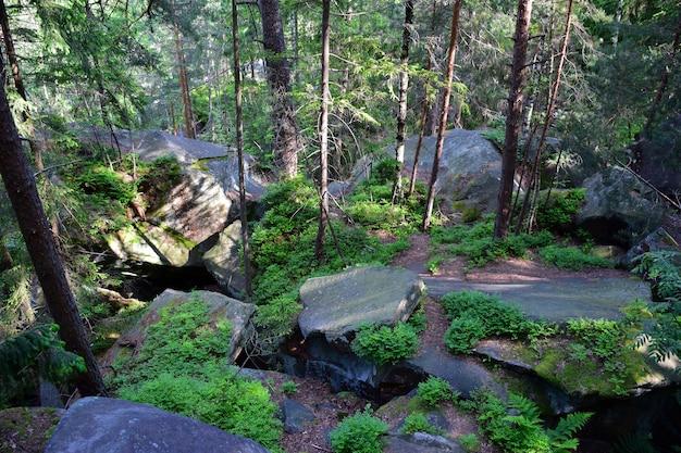 Куча больших каменных валунов, покрытых зеленым мхом и травой в густом хвойном холмистом лесу.
