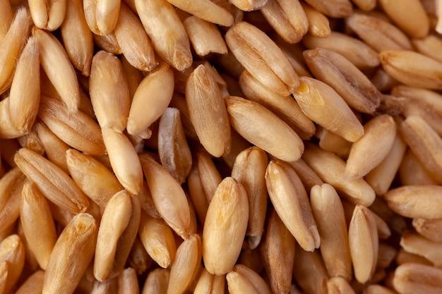 オーツ麦の種の山、健康的な製品。食物
