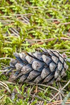 森の中の松ぼっくりは、苔と松を背景に地面に横たわっています。