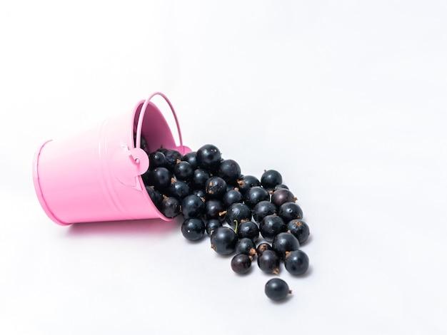 黒スグリが注がれるピンクのバケツ。