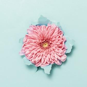 引き裂かれた青い紙を通してピンクの花。上面図。