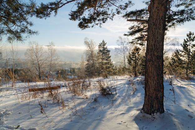 凍るような冬の晴れた日に森の中で休む場所。木の間の木製のベンチ。