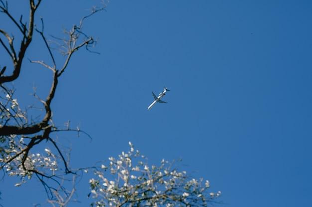 空の飛行機花の咲く木が手前にあります