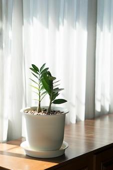 Растение в белом горшке у окна лежит на деревянном столе в солнечный день.