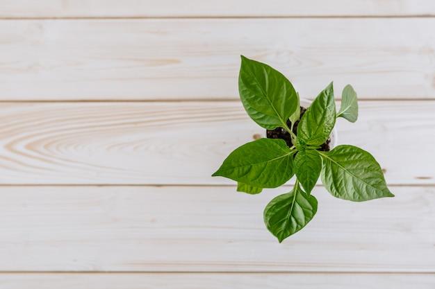 Пластиковая чашка с землей, в которой есть молодой зеленый перец для рассады. стекло с растением находится на деревянной поверхности