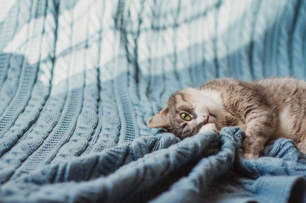 Игривый серый кот с зелеными глазами лежит на синем вязаном пледе