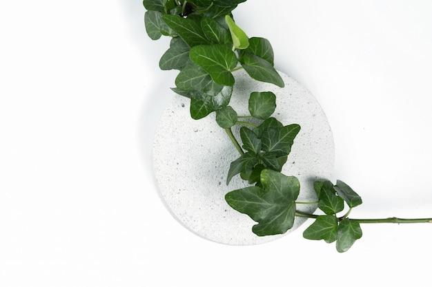 흰색 배경에 포장 및 화장품, 위쪽 전망을 제공하기 위해 담쟁이 식물의 녹색 잎이 있는 콘크리트로 만든 연단입니다. 흰색 콘크리트 돌 질감의 제품 디스플레이