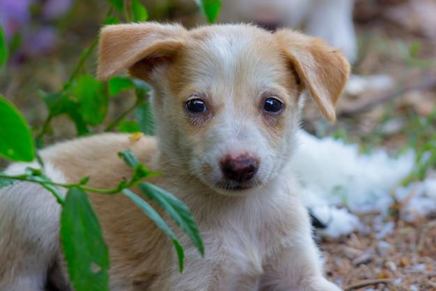 地面に静かに座ってカメラを見ているかわいい子犬の犬の肖像画