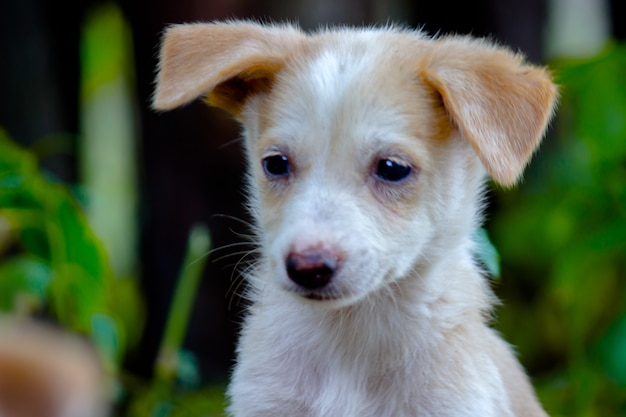 地面に座っているかわいい子犬の犬の肖像画