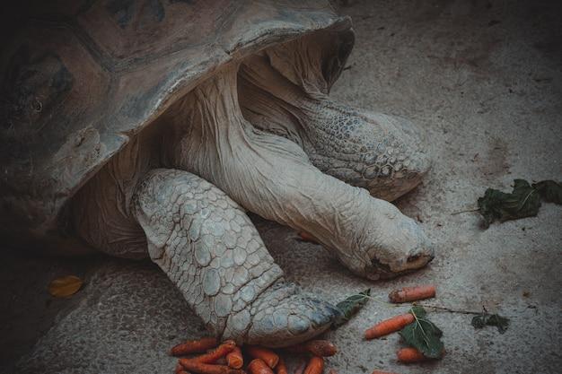 素敵な陸亀の肖像画