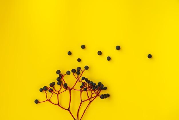小枝の野生の青いブドウの束の黄色の背景に対するはがき。テクスチャ、秋のテーマ。テキストの場所。フラットレイ、レイアウト