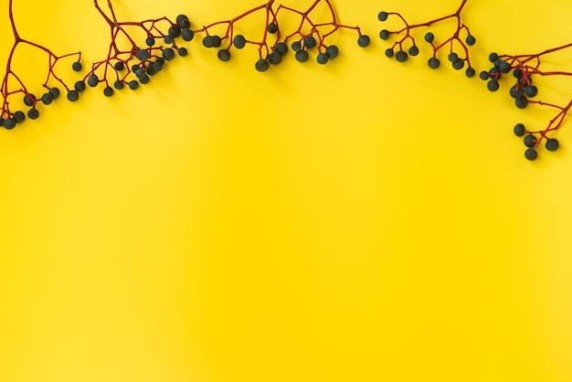 小枝の野生の青いブドウの束の黄色の背景に対するはがき。テクスチャ、秋のテーマ。テキストの場所