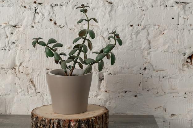 白いレンガの壁に向かってテーブルの上に鋸で挽かれた木の上の鉢植えの観葉植物が立っています。