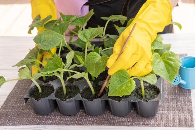 きれいな女性が庭に苗を植えています