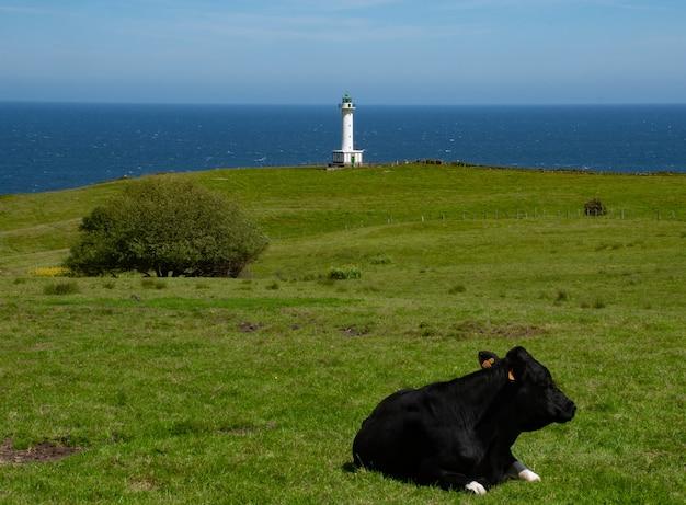 緑の牧草地に灯台と海岸がある牛のための特権的な風景