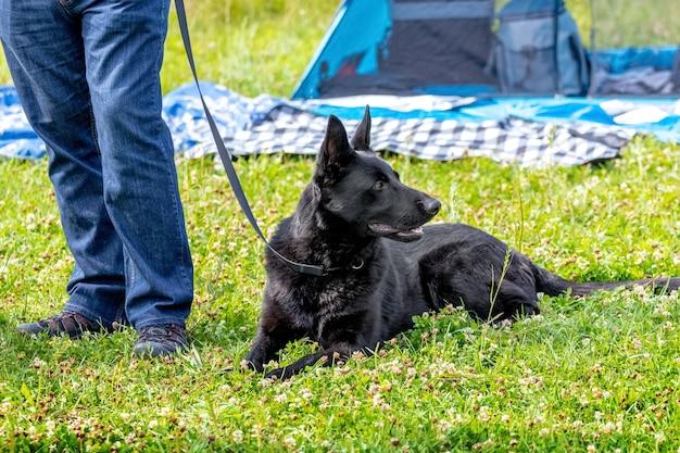 純血種の黒い犬が飼い主の隣の芝生に横たわっています。公園で犬と一緒に休んでいる男