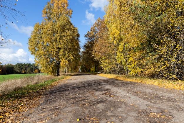 Тихая дорога в осенний сезон