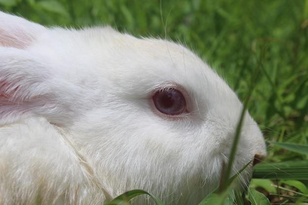 녹색 들판의 토끼