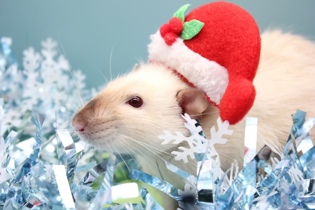 Крыса в рождественской шапке и среди рождественской мишуры. с новым годом крысы 2020 по китайскому календарю.