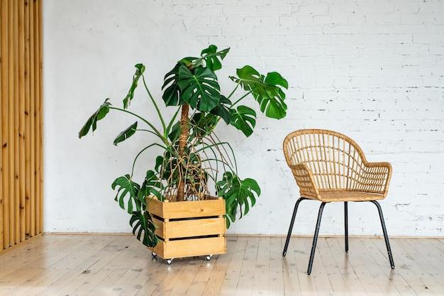 Плетеный стул из ротанга на фоне белой кирпичной стены с большим горшечным растением. современная каменная кирпичная стена пустая гостиная.