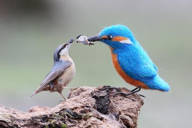 本物の鳥とぬいぐるみの面白い写真