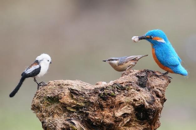 本物の鳥とぬいぐるみ。シジュウカラとエナガのぬいぐるみ