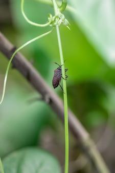 야채 뿌리를 먹으려는 붉은 딱정벌레