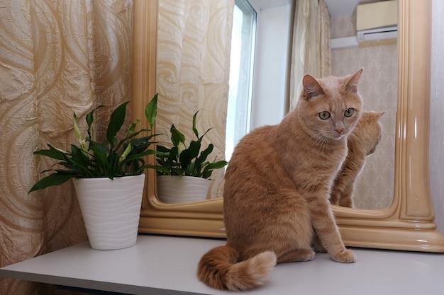 鏡と観葉植物の隣の内部にいる赤い猫。あなたの家のアレルゲン