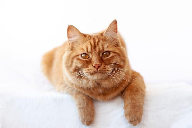 빨간 고양이는 주둥이가 카메라를 향하고 발이 아래로 매달려있는 흰색 표면에 누워 있습니다.