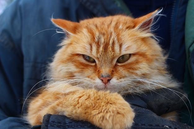 그의 손 클로즈업에 빨간 고양이