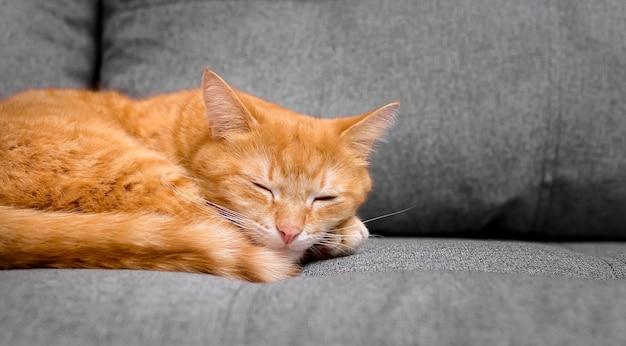 Рыжий кот спит на сером диване