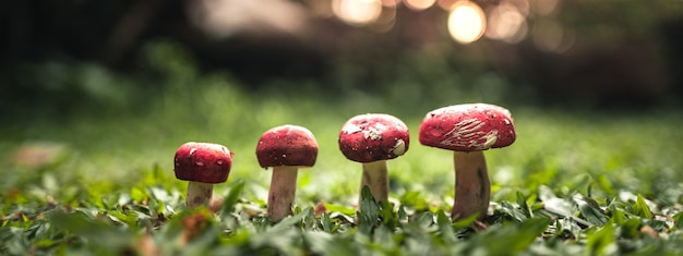 草の上に生えている赤いキノコ