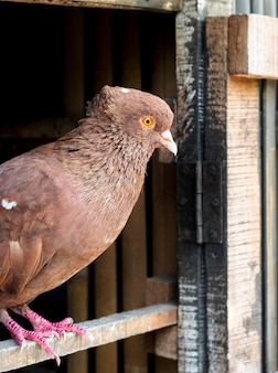 ロフトのドアに立っている赤い鳩