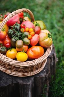 庭でのさまざまな種類のトマトの豊作