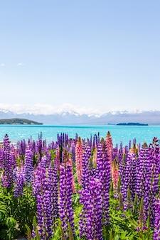 호수 기슭의 다채로운 색상