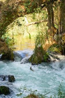 A river in the jungle