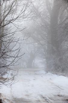 겨울 시즌에 눈으로 덮인 도로