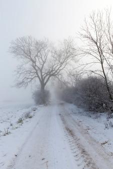 冬は雪に覆われた道