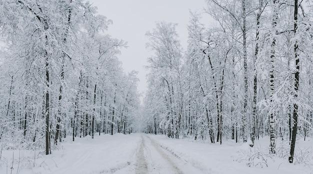 겨울 눈 덮인 숲의 길