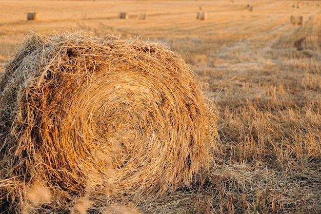 Рулон сена на скошенном поле в сумерках или рассвете.