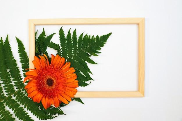 거베라 꽃과 고사리 잎의 낭만적인 구성. 흰색 바탕에 오렌지 꽃과 사진 프레임.