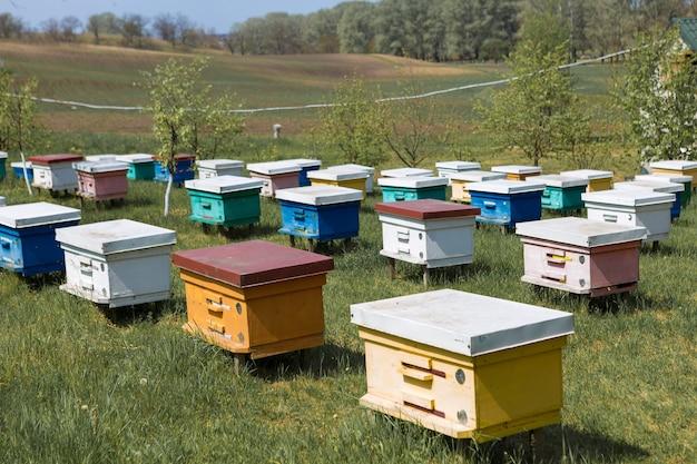庭の私有養蜂場に一列に並んだミツバチの巣箱。蜂蜜産業。