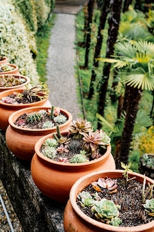 Ряд глиняных горшков с суккулентами и кактусами.