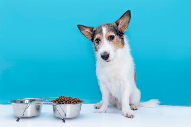 슬픈 개는 애완 동물을 위해 적절하고 균형 잡힌 영양과 마른 음식 그릇에 앉아 있습니다.